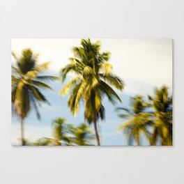 Palm Glimps by Boone Speed Canvas Print