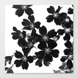 Primrose In BW Canvas Print
