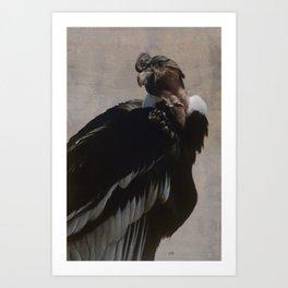 Andean Condor Art Print