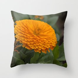 Calendula Flower Throw Pillow