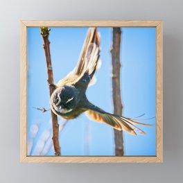 Fantail Fly Framed Mini Art Print