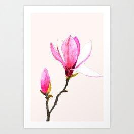 magnolia watercolor painting Art Print