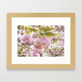 double cherry blossoms with soft hues of pink petals Framed Art Print