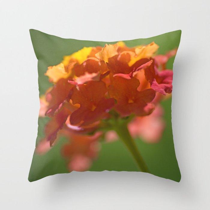 Lantana Camara Throw Pillow
