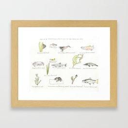 San Francisco Aquatic Native Species List Framed Art Print