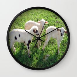 Three Cute Spring Lambs Wall Clock