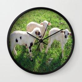 Three Cute Spring Lambs Wall Clock