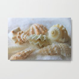 Seashells 3 Metal Print
