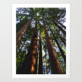 Trees! Henry Cowell State Park - California Art Print