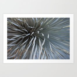 Growing grays Art Print