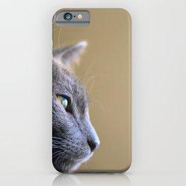 Russian Blue Kitten Portrait 4 iPhone Case