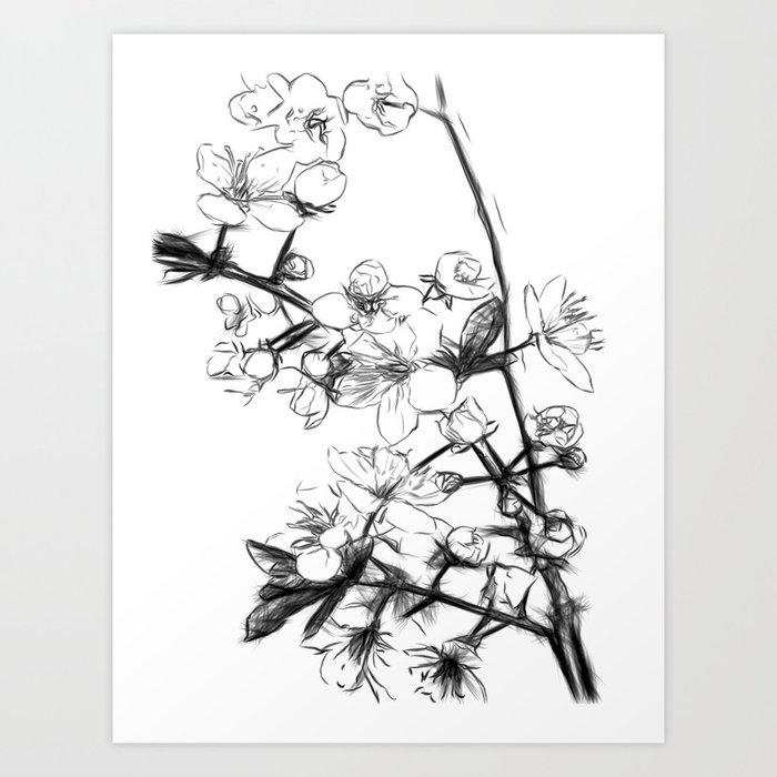 Drawing Artwork Cherry Blossom