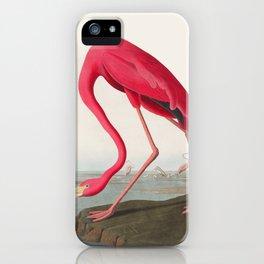 Fuchsia Flamingo Audobon Painting iPhone Case