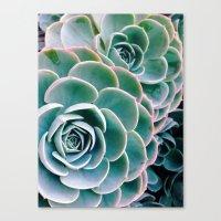 succulents Canvas Prints featuring Succulents by Ez Pudewa