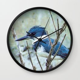 Young Belted Kingfisher (Repost) Wall Clock