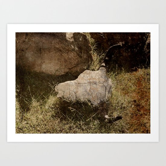 Bison Horns Art Print