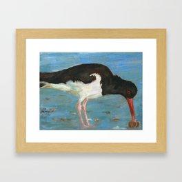 Scholekster / Oyster Catcher Framed Art Print
