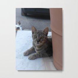 Alex Cat Portrait Metal Print