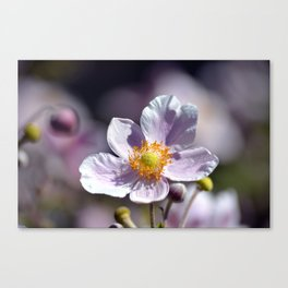 Pretty in White and Purple Canvas Print