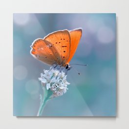 Small Copper 02 Metal Print