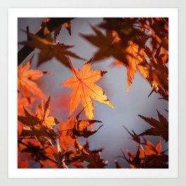 Autumn Photography - Frame Of Orange Leaves Art Print