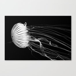Black and white jellyfish Canvas Print
