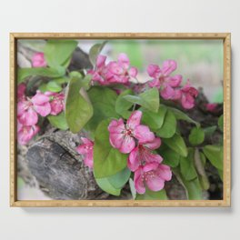 Pink Crab Apple Tree Blossoms 2 Serving Tray