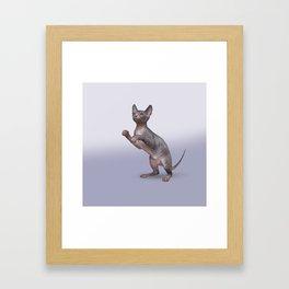 Drawing Sphynx kitten Framed Art Print