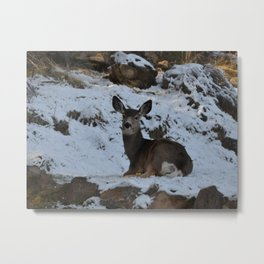 East Oregon Mule Deer Metal Print