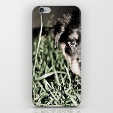 ROTTIE LOVE iPhone & iPod Skin