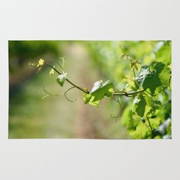 The Vine Rug