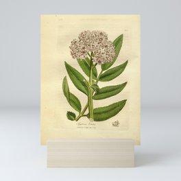 Flower sambucus ebulus4 Mini Art Print