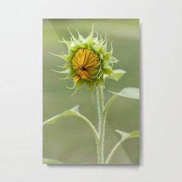Baby Sunflower Metal Print