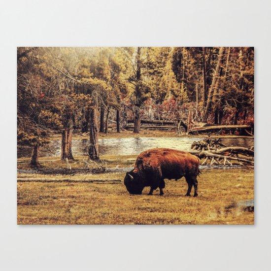 BUFFALO AND RIVER Canvas Print