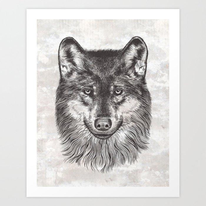 Canis Lupus (Gray Wolf) Art Print