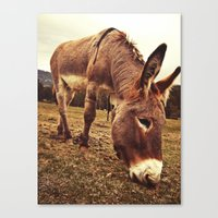 donkey Canvas Prints featuring Donkey by Vic Torys