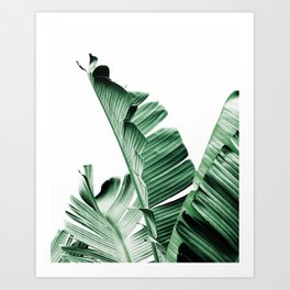 Banana leaf, Plant, Green, Minimal, Trendy decor, Interior, Wall art, Photo Art Print Art Print