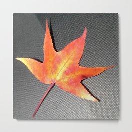 A Single Leaf Metal Print