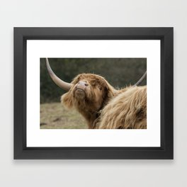 Funny Scottish Highland cow Framed Art Print