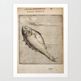 Hugo de Groot's Syntagma Arateorum 1600 - 33 Piscis Austrinus Art Print