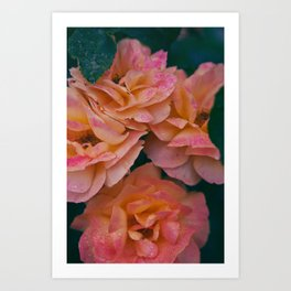Point defiance rose garden on a rainy day Art Print