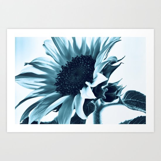 Blue Sunflower Art Print