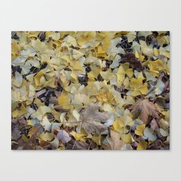ginkgo gold Canvas Print