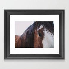 Equine Framed Art Print