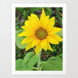 Sunflower beauty Art Print