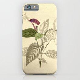 Flower justicia speciosa26 iPhone Case