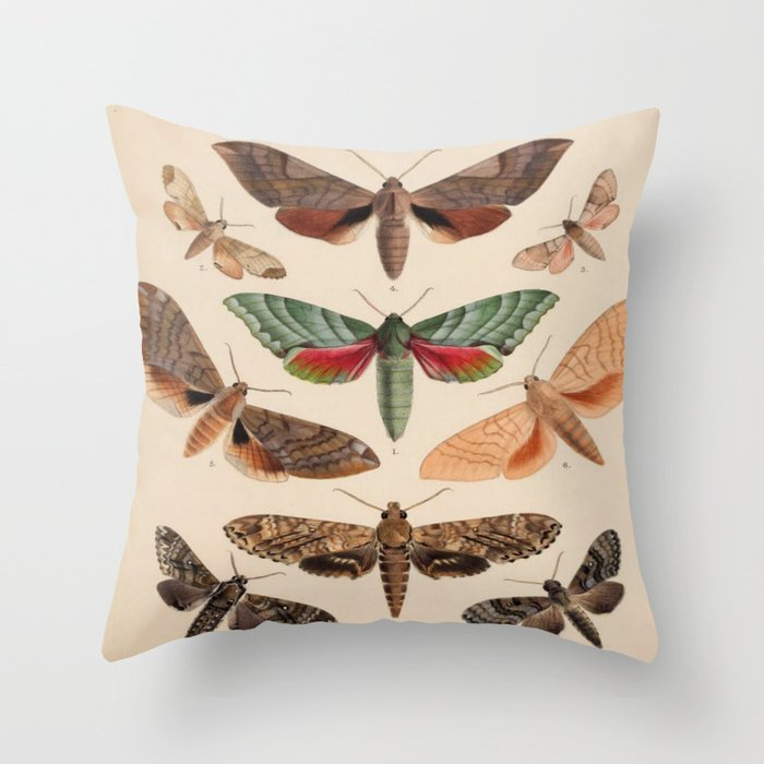 Vintage Natural History Moths Throw Pillow