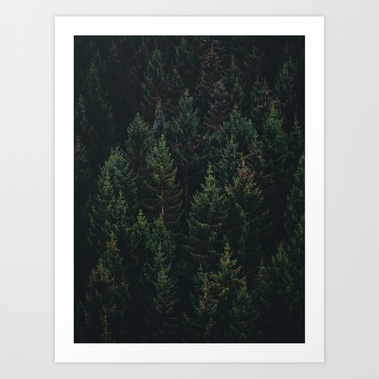 Forest of Pines Art Print