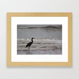Reddish Egret in the Surf Framed Art Print