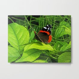 Red Admiral side view Metal Print